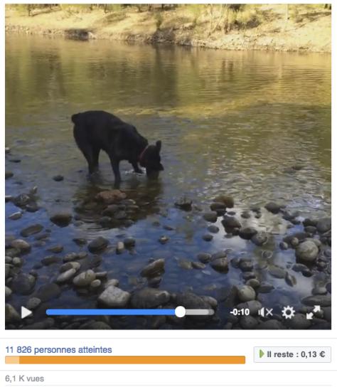 Daima rapporte les cailloux de la rivière !